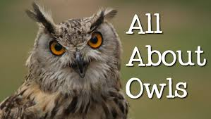 all about owls for kids backyard bird series freeschool youtube