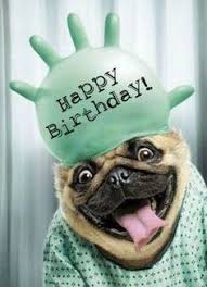 Happy Birthday Pug Meme - cake hat funny happy birthday cards birthdays and funny happy
