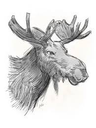drawings of moose new hampshire u0026 vermont moose hunting guide