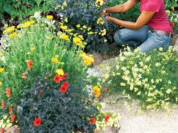 how to design a bright blooming flower garden sunset