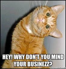 Hey I Love You Meme - funny i love you memes cat litle pups