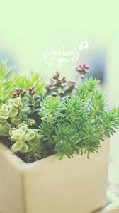 nature vitality aesthetic fleshy plant pot iphone 8 wallpaper