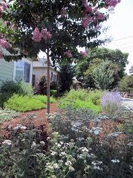 lawn replacement drought tolerant garden u0026 landscape design in