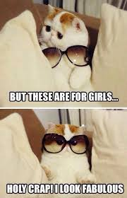 Funny Kitten Meme - funny kitty funny stuff pinterest kitten animal and