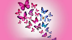 free pink butterfly wallpapers picture long wallpapers