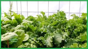 organic vegetable gardening for beginners youtube