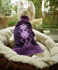 amazon com argyle knit pet sweaters clothes for small dogs
