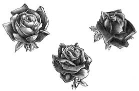 pictures black rose sketch drawing art gallery