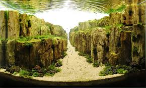 Aquascaping Plants Amazing Underwater Landscapes Of Competitive Aquascaping Wave Avenue