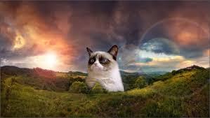Grumpy Cat No Meme - jimmyfungus com the best of grumpy cat the best grumpy cat memes
