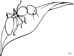 ant is walking on a leaf coloring page free printable coloring pages