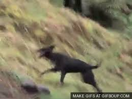 Hog Hunting Memes - wild gif find share on giphy