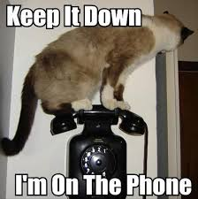 Meme Telephone - irti funny picture 2350 tags cat keep it down on the phone