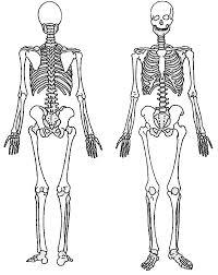 front skeleton coloring netart