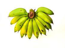 banana comb banana comb stock photo image 40563508