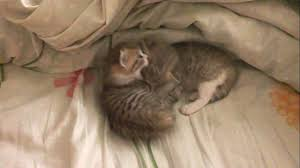 very slow kittens like a zombies youtube