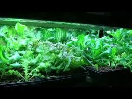 68 best hydroponie u0026 windowfarm images on pinterest gardening