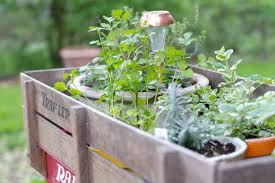 radio flyer herb garden the things i think about
