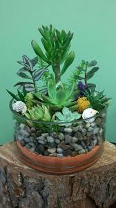 succulent house succulent terrarium bowl in hayward ca hayward house of flowers