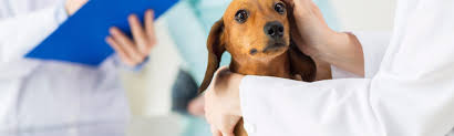 home cape cod veterinary specialists