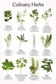 image result for herbs plants food pinterest herbs