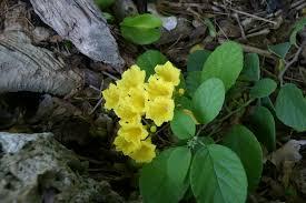 All Year Flowering Shrubs - spring plant sale 2012 fairchild garden 33156