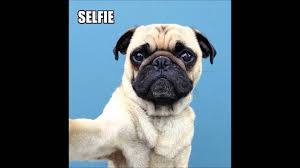 Funny Pug Memes - 30 funny pug memes andym youtube