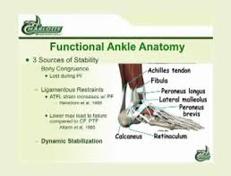 High Ankle Sprain Anatomy It U0027s Not A Simple Ankle Injury The Long Term Consequences Of A