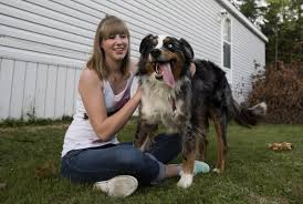 australian shepherd b c thor the dog returns home 2 years after b c u0027dognapping