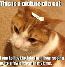 Cat Trap Meme - funny cat memes kitten meme