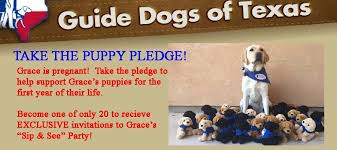 Sponsor A Puppy For The Blind Puppy Pledge 900x400 Jpg