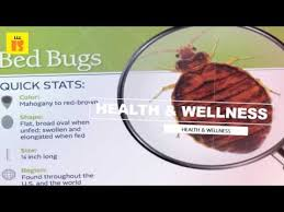 How To Get Rid Of Bed Bugs In Mattress Rubbing Alcohol How To Get Rid Of Bed Bugs Completely And