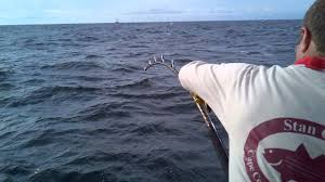 giant tuna fishing at stellwagen bank off cape cod youtube
