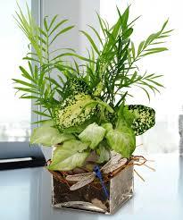 celebrating trumbull u0027s best boss city line florist