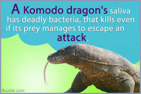 facts about the komodo dragon that kids would enjoy reading