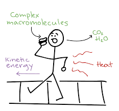 The Amount Of Light And Temperature Are Examples Of The Laws Of Thermodynamics Article Khan Academy