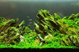 Aquascaping Guide Aquascaping A Tank Of Beauty