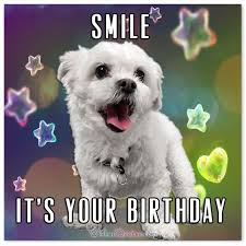 Birthday Animal Meme - top 29 birthday memes quotes and humor