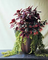 container garden ideas for any household martha stewart