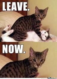 Meme Kitty - bad kitty by rainbowbatch meme center