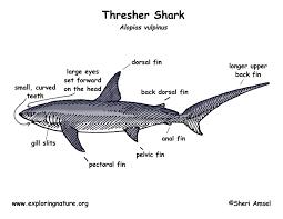 dogfish diagram
