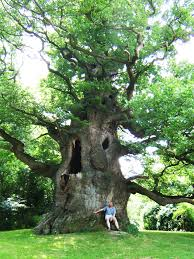 tree climbing the best wild places in the uk wild things publishing