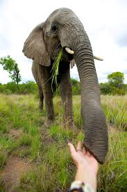 research u2014 adventures with elephants