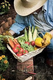 organic gardening tips southern states cooperative