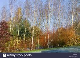 lady farm somerset uk judy pearce large garden in winter silver