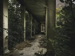 Abandoned Place by Free Images Tree Forest Light House Sunlight Alley Spooky