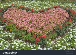 heartshaped pink flowers garden stock photo 101885077 shutterstock