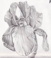 grey ink iris flower tattoo design