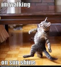 Good Cat Meme - and don t it feel good lolcats lol cat memes funny cats