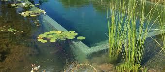 Natural Swimming Pool Our Pools Natural Swimming Pools Australia